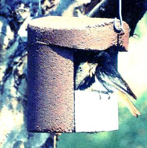 Wenn das Vogelhaus zur Vogelvilla wird